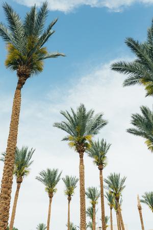 Coconut palm trees, beautiful tropical background Foto de archivo - 124939608
