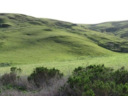 Green carpet hills near coast of central California  Stock Photo - 12954243