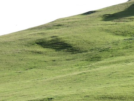 Late afternoon shadows add eerie masklike features to an almost pure green carpet, in a landscape from central coast California