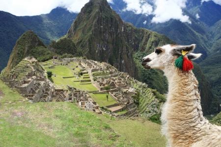 ラマで歴史的な失われた絶滅都市マチュピチュ - ペルー