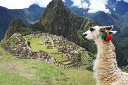 llama: Llama a Citt� storica perduta di Machu Picchu - Per� Archivio Fotografico