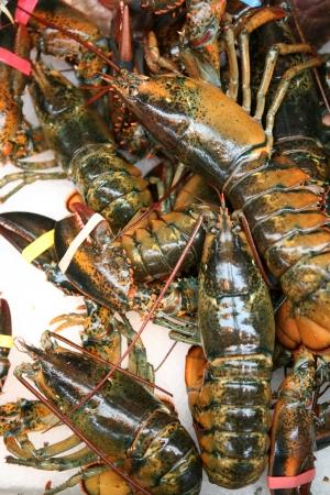 American lobsters, Homarus americanus, ready for sale