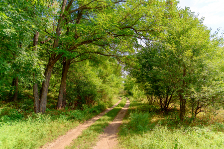Beautiful Nature Landscape Summer View Forest Day. Long road in wood. Stock Photo