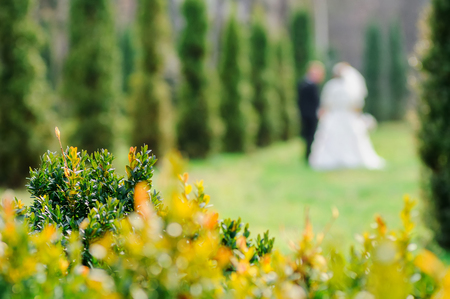 Petals of spring bushes. Elements at a wedding. The lens blur image of couple of groom and bride on a background. Wedding walk in park. Stock Photo