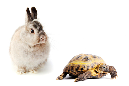 Fluffy hare and turtle on a white background. Speed concept.