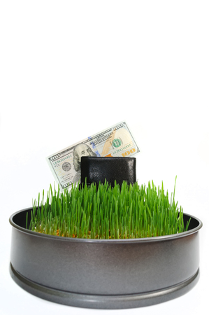 Purse with money in a grass. Cultivation of money. Business the bringing-in income. The agricultural enterprise making profit. A fresh grass on a white background with a place under the text. Stock Photo