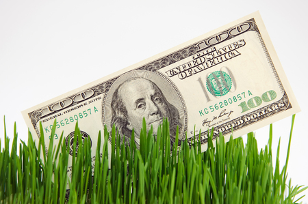 one hundred dollars: Banknote in a grass. Cultivation of money. Business on agriculture. Stock Photo