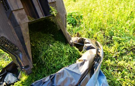 Picking up mowed green grass into a bag. Folding cut grass, close up. Imagens