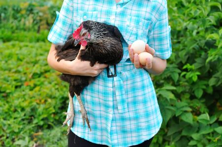 The young worker of poultry farm holds in hand chicken a layer and house eggs