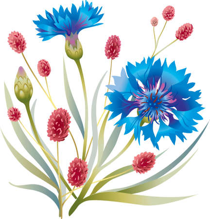 Sincerity, simplicity and sophistication of the lines of meadow flowers Vetores