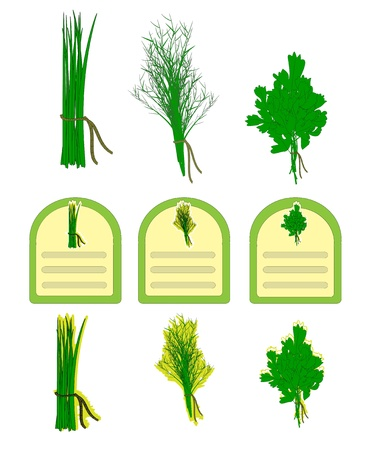 dill and parsley: Herbs vector