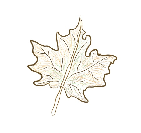 maple leaf isolated vector Vector
