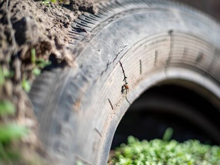 the tire is buried in the ground trash in the forest  Stock Photo