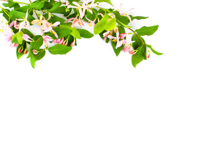 Frame from bright flowering branches of a wild plant with miniature pink flowers on a white background. Top view, flat lay, place for text, copy space. Spring or summer concept.