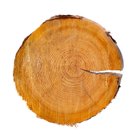 Saw cut of a coniferous tree close-up on a white background, isolate. Top view, flat lay, place for text, copy space.
