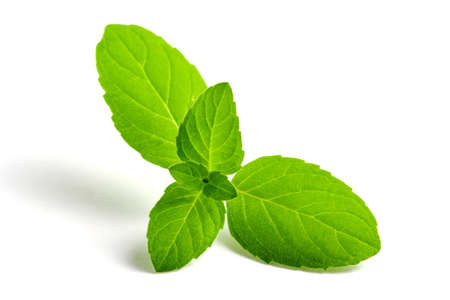Mint green leaves close-up on a white background, isolate. Banque d'images