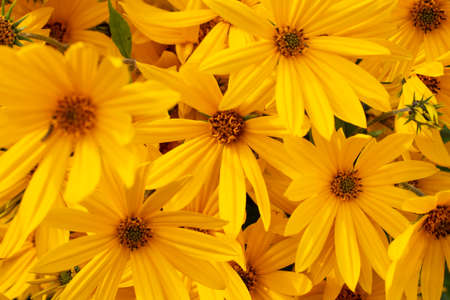 Fall flower composition. Bright yellow or orange flowers close-up pattern. 스톡 콘텐츠 - 155372550