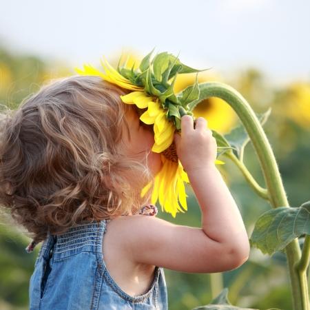 olfato: Niño lindo con girasol en campo de verano