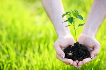 earth handful: Young plant in hand against green nature background Stock Photo
