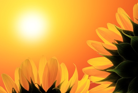 Two sunflower on background sunrise photo