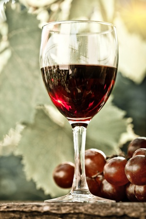 Red wine glass and bunch of grapes against vineyard. Vintage look photo