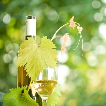 white wine bottle: Botella de vino blanco, vid y copa de vino contra el fondo verde de la primavera Foto de archivo
