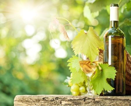 white wine bottle: Botella de vino blanco, vidrio, vid y racimos de uvas contra el fondo verde de la primavera