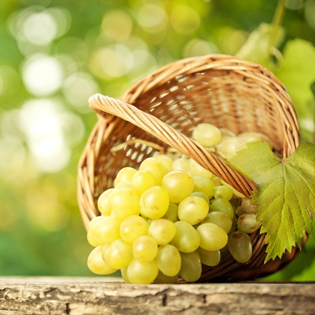 Bunch of grapes and vine leaf in basket on wooden table against green spring background photo