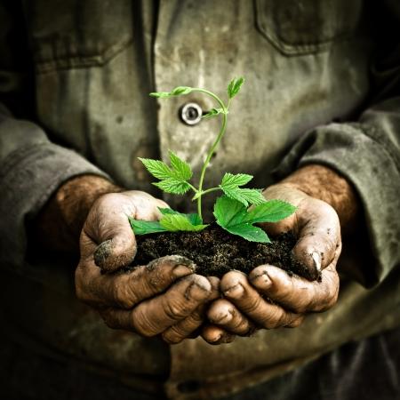 erde: Alter Mann Hände, die eine grüne junge Pflanze. Symbol des Frühlings und Ökologie-Konzept