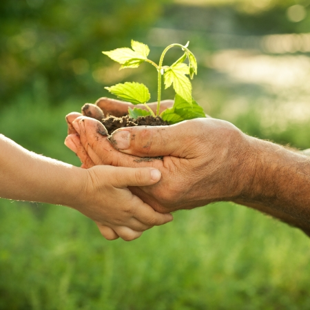 Hands of elderly man and baby holding a young plant against a green natural background in spring. Ecology concept