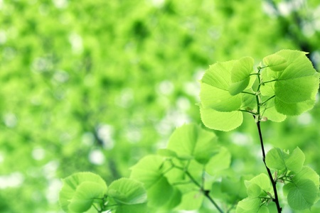 Leaves spring green background photo