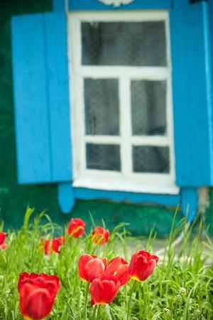 Spring flower against window background photo
