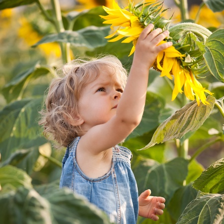 sunflowers field: Beautiful child with sunflower in spring field