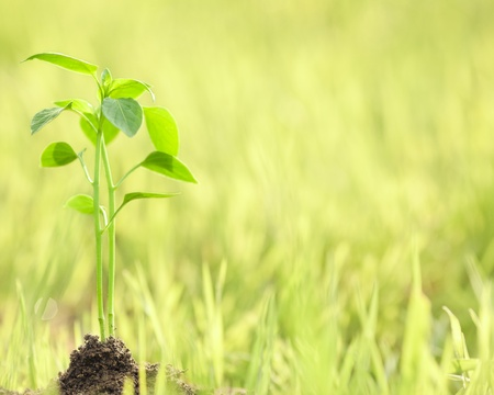 New life against spring green natural background. Ecology concept Stock Photo - 11870404