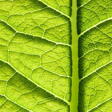 feuille arbre: Texture de la feuille verte. R�sum� fond de printemps Banque d'images