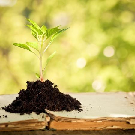 earth day: Young plant on old book against spring natural background. Ecology concept Stock Photo