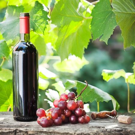 Botella de vino tinto y racimo de uvas en la mesa de madera vieja en contra de la viña en el verano Foto de archivo - 11936400