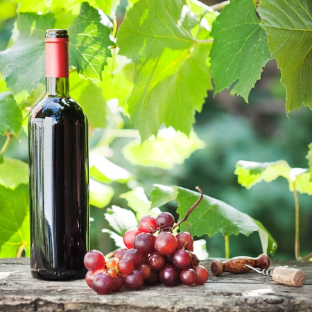 Red wine bottle and bunch of grapes on old wooden table against vineyard in summer photo