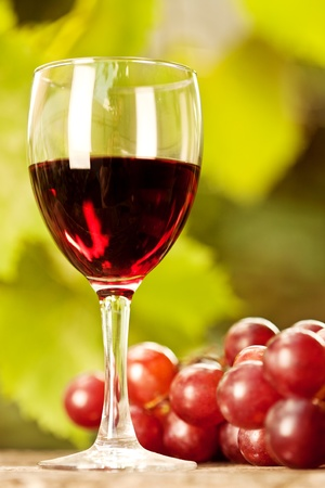 Red wine glass and bunch of grapes against vineyard in summer Stock Photo - 11936390