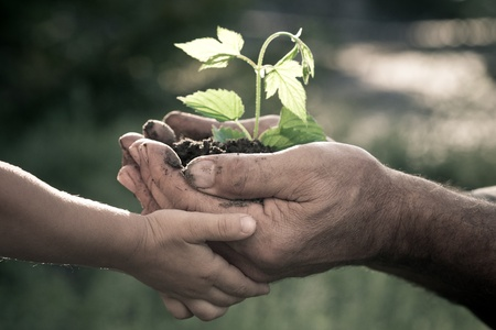 Hands of elderly man and baby holding a young plant against a natural background in spring. Ecology concept photo