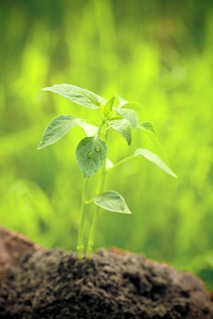 Young plant against spring green natural background. Ecology concept Stock Photo - 11936395