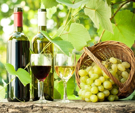 Red and white wine bottles, two glasses and bunch of grapes on old wooden table against vineyard photo