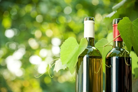 Red and white wine bottles and young vine against natural spring background photo