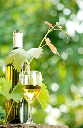 White wine bottle, young vine and glass against green spring background photo