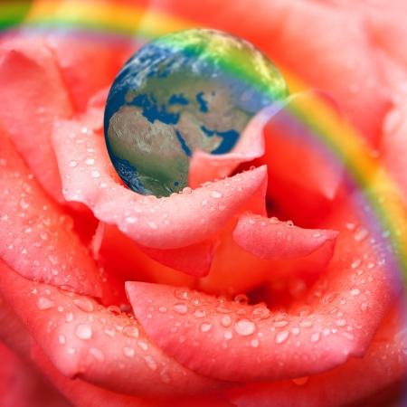 protect earth: Earth on rose petal  Ecology concept  Macro shot.