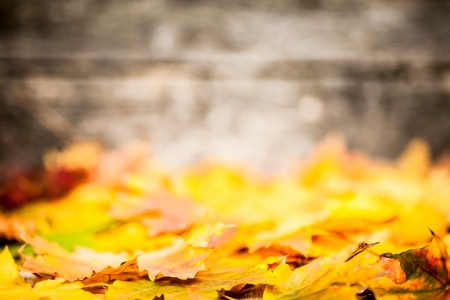 fall leaves border: Autumn border from yellow maple leaves on old wooden background. Very shallow depth of field