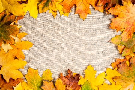 fallen leaves: Autumn frame from fallen maple leaves on canvas