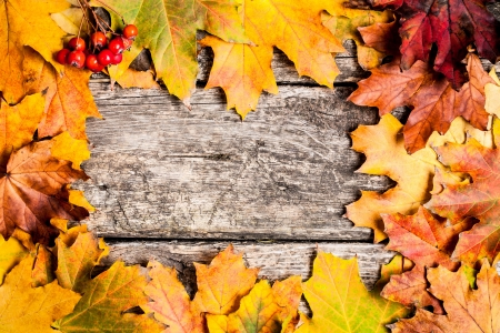 Autumn frame from ashberry and maple leaves on wooden background photo