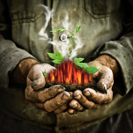 environment protection: Green young plant in old man hands  Greenhouse effect and global warming concept