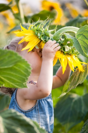 Child smelling sunflower in spring field